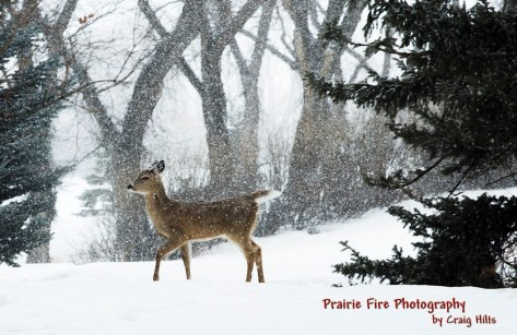Beautiful winter shot.  Even though he hates winter.  :)